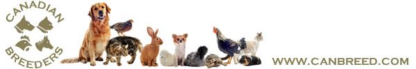 Canadian Breeders Online